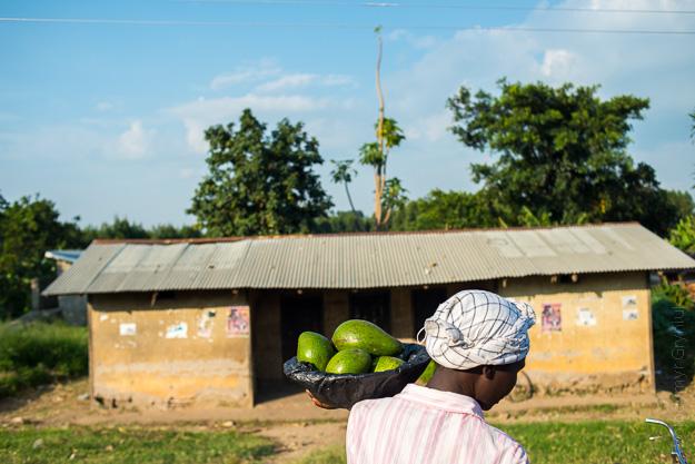 авокадо Уганда