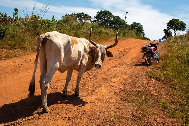 Африка Уганда