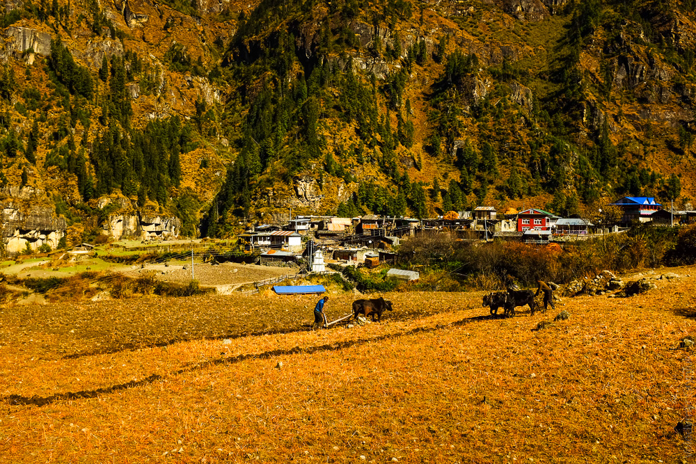 nepal_16_annapurna_naar_phu_kathmandu-10121